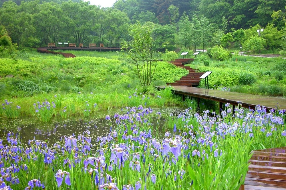 pyeonggang-botanical-garden-in-pocheon_th