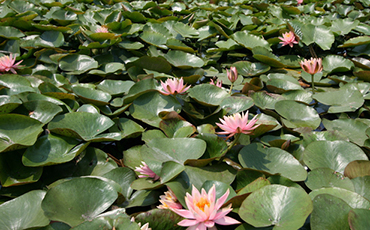 Lotus Theme Park